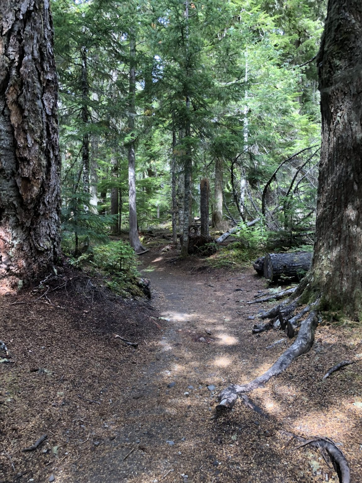 A hike within Mt. Rainer, WA and up to Carter Falls, a segment of the Wonderland Trail. B62F9175-A46